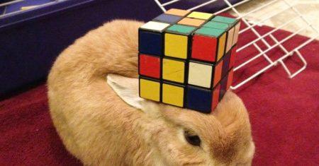 cinco perfiles de Twitter. Cosas en un conejo.cinco cuentas de Twitter