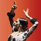 Flamenco Joven 17