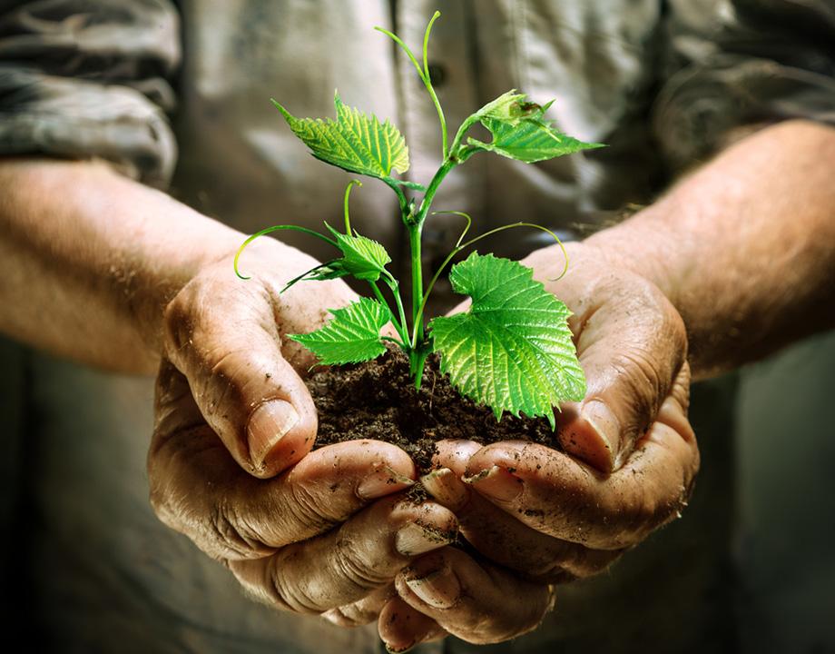 planta y tierra en la mano