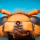 Robobee abeja microrrobot micro robot