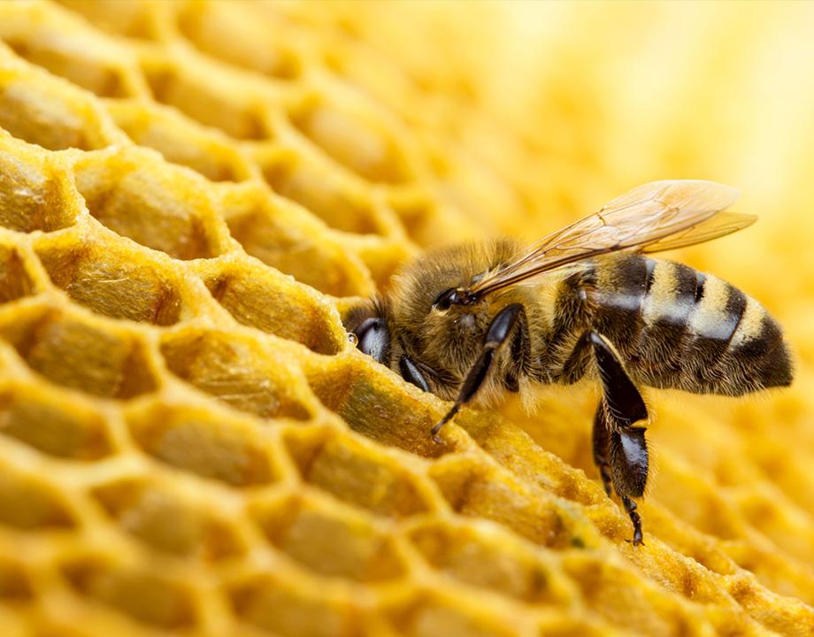 abeja robobee