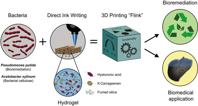 Bacterias para imprimir