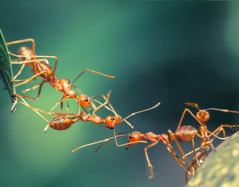 technium las hormigas forman sistemas complejos