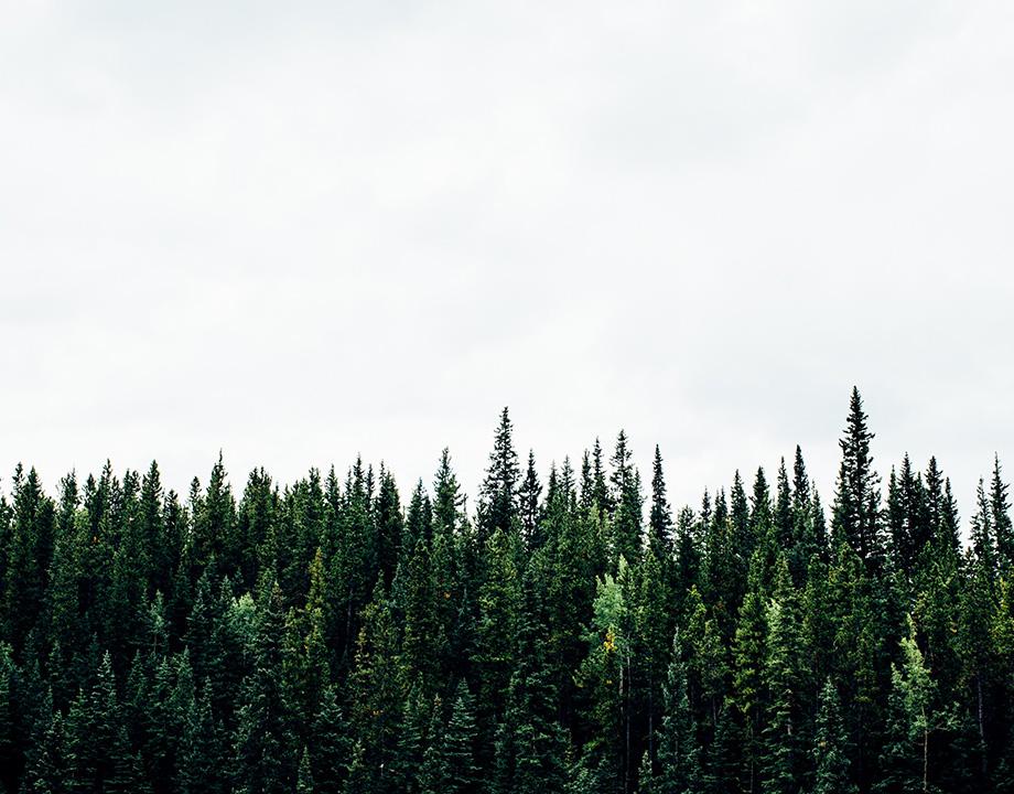 bosque plantar dron semillas