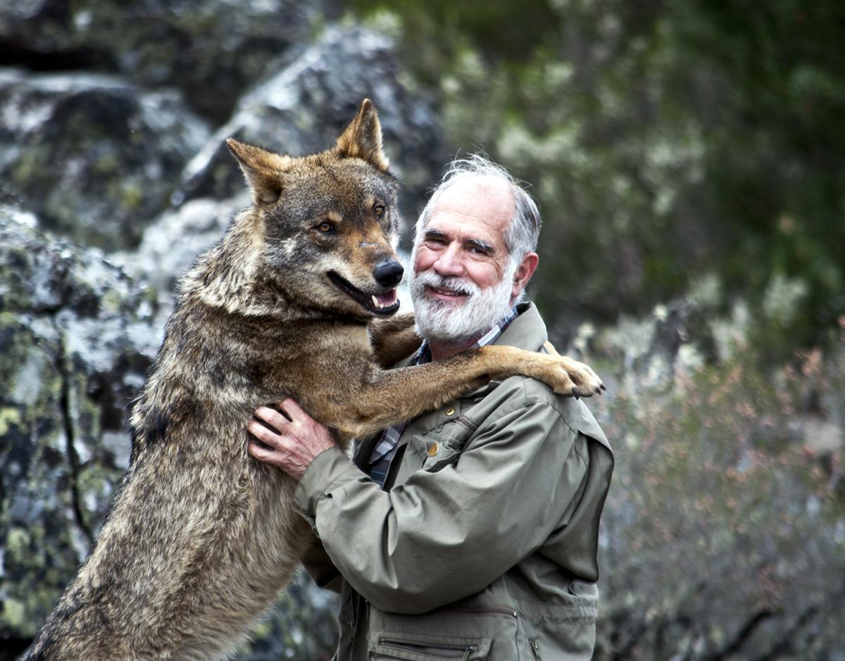 El Lobo Ibérico Siempre Ha Sido Un Animal Polémico Nobbot