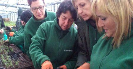 Grupo de jardineras en el vivero municipal de la Casa de Campo de Madrid, lejos de Silicon Valley