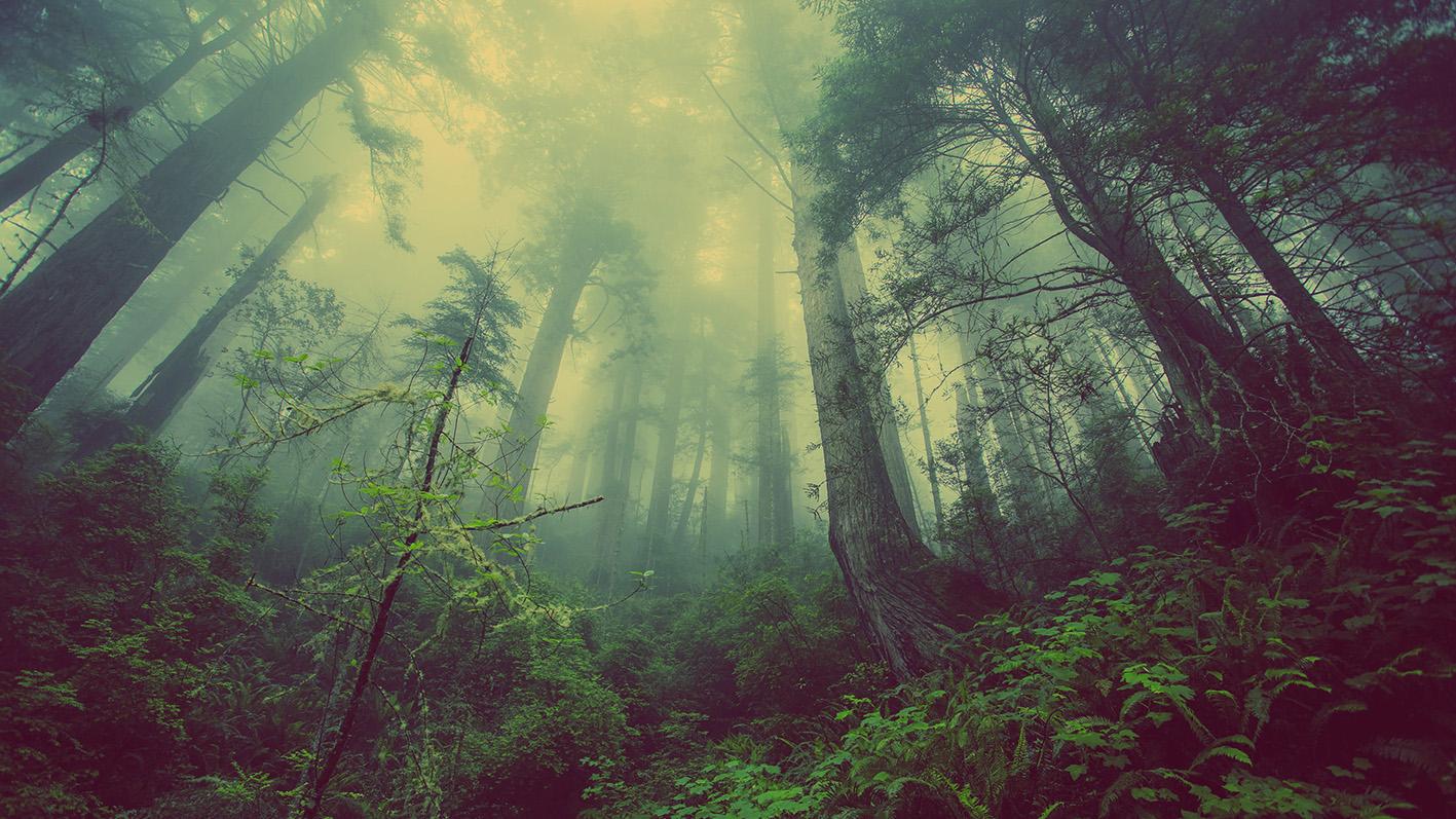 aforestacion-bosque-co2-geoingenieria