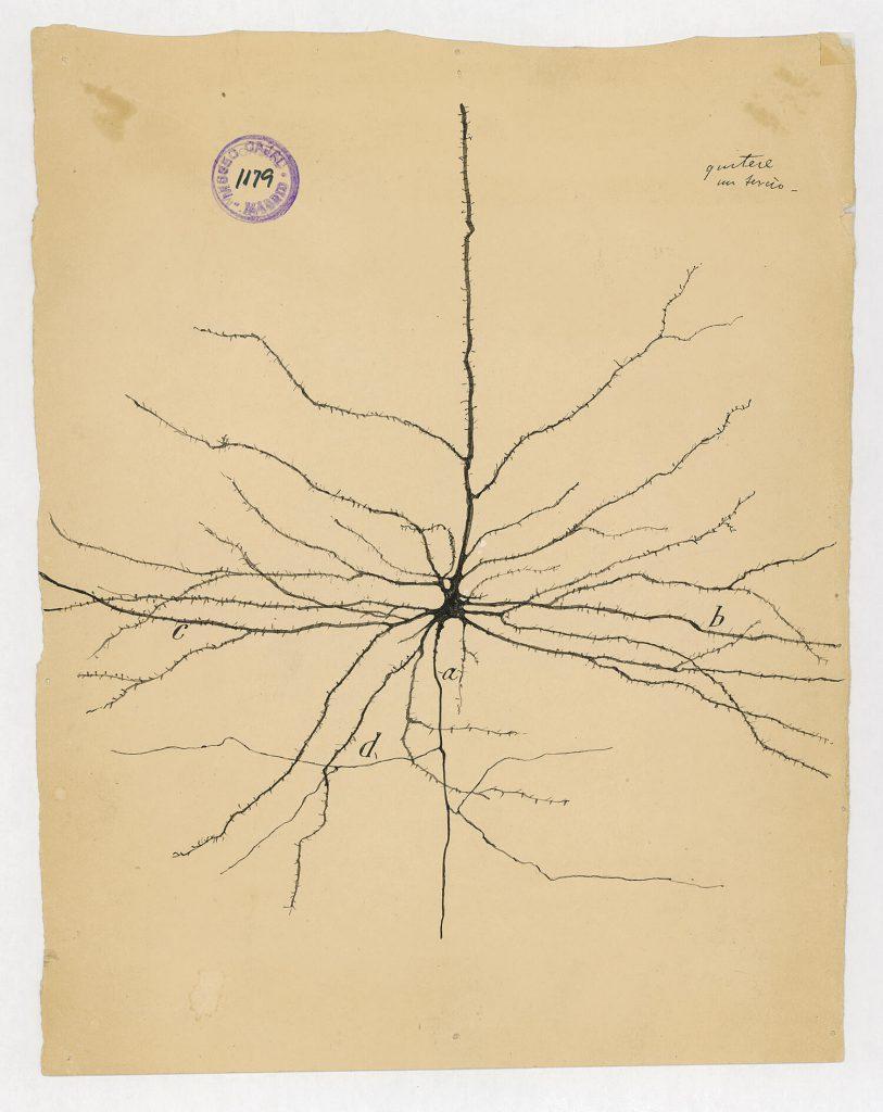 ilustraciones de ramon y cajal m1179