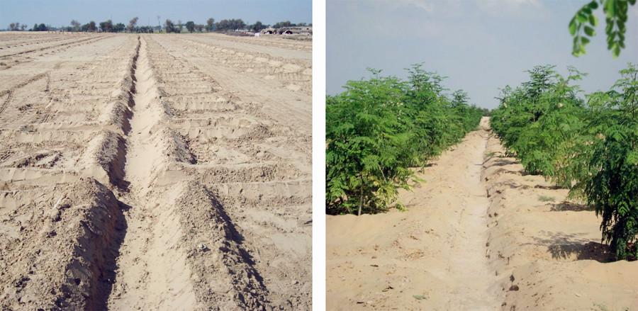 Cultivos en el desierto