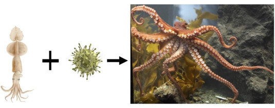 pulpo-extraterrestre-retrovirus