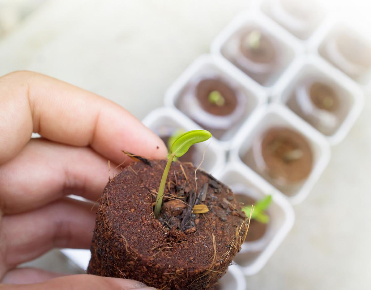vida-social-plantas-experimento-torices