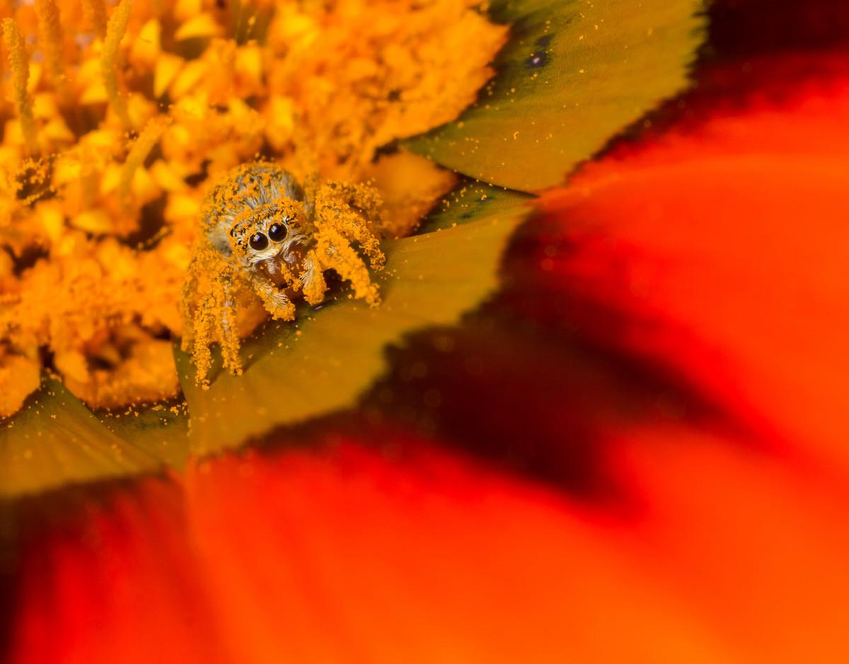 vida-social-plantas-polinizador-arana-torices