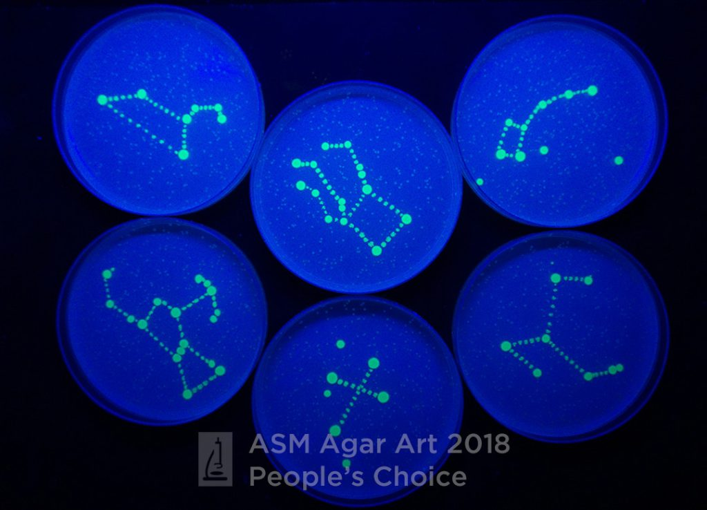 agar art people's choice