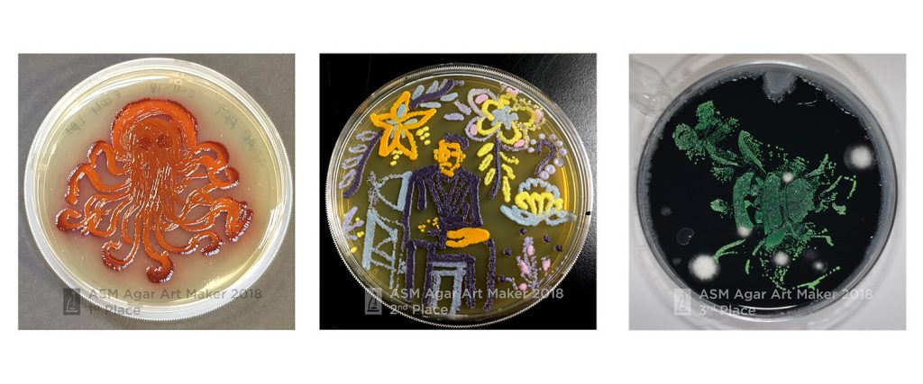 agar art maker