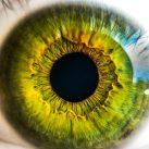 Retina de grafeno
