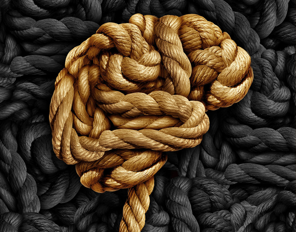 tecnologia-cerebro-organoides-animales