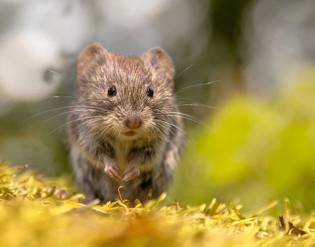 tecnologia-holobionte-raton-campo-bioma