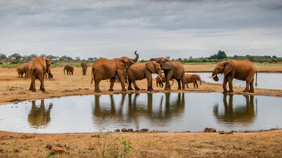 Elefantes en Kenia