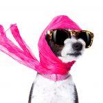 El reconocimiento facial se aplica en perros y gatos