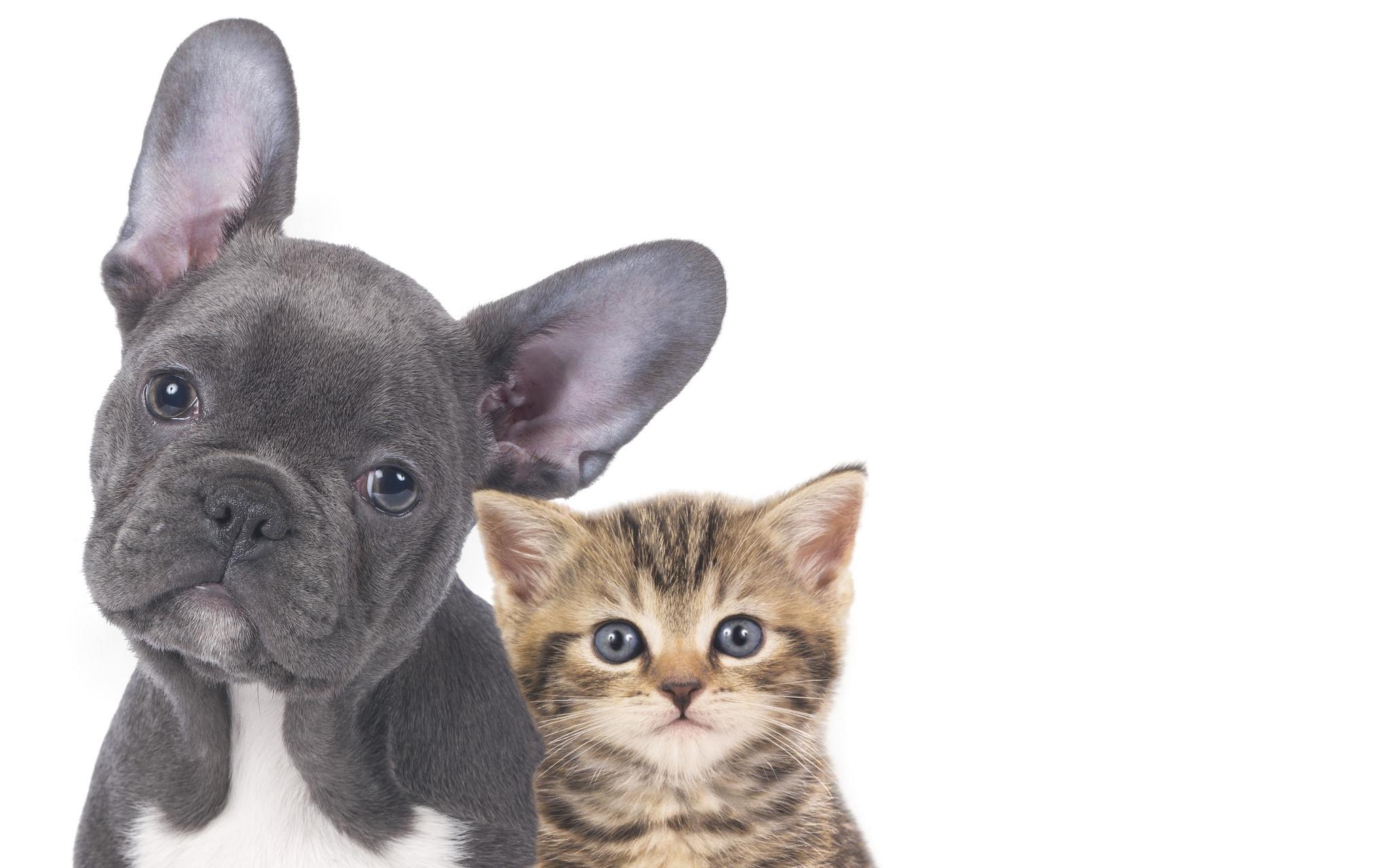 El reconocimiento facial en animales