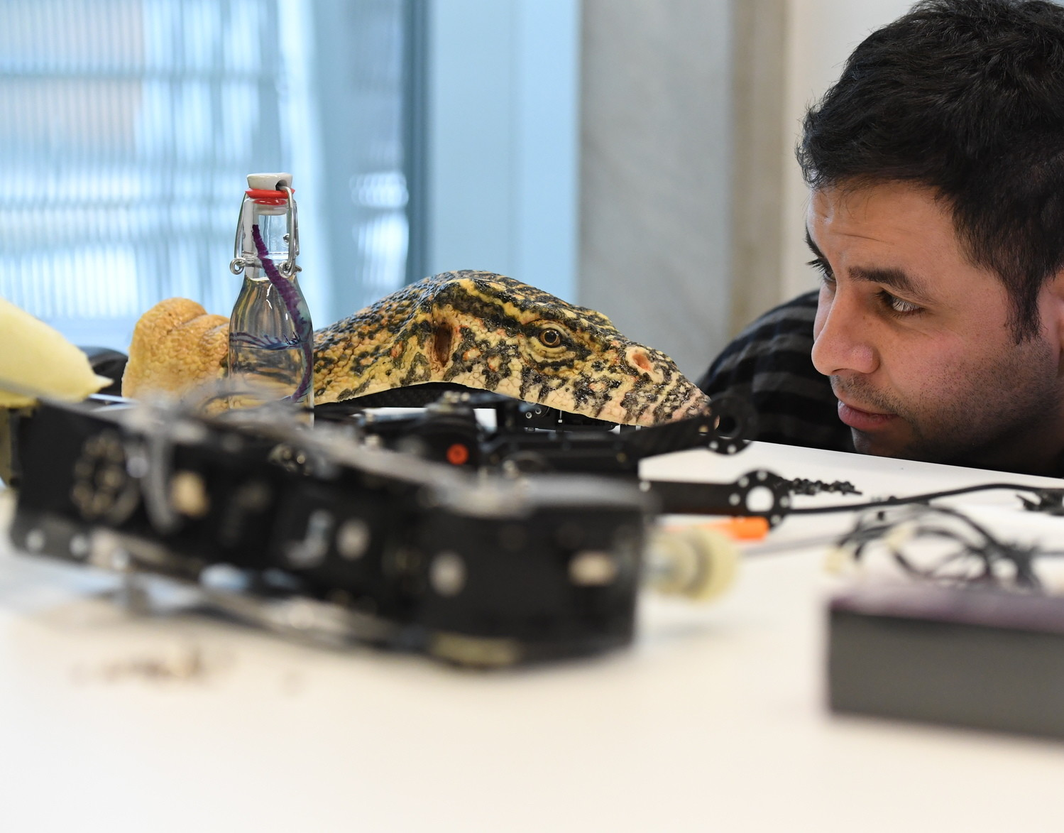 Los biorobots imitan el aspecto y los movimientos de animales reales.