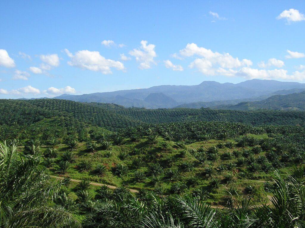 Cultivos de productos de alimentación - Alimentación y medio ambiente