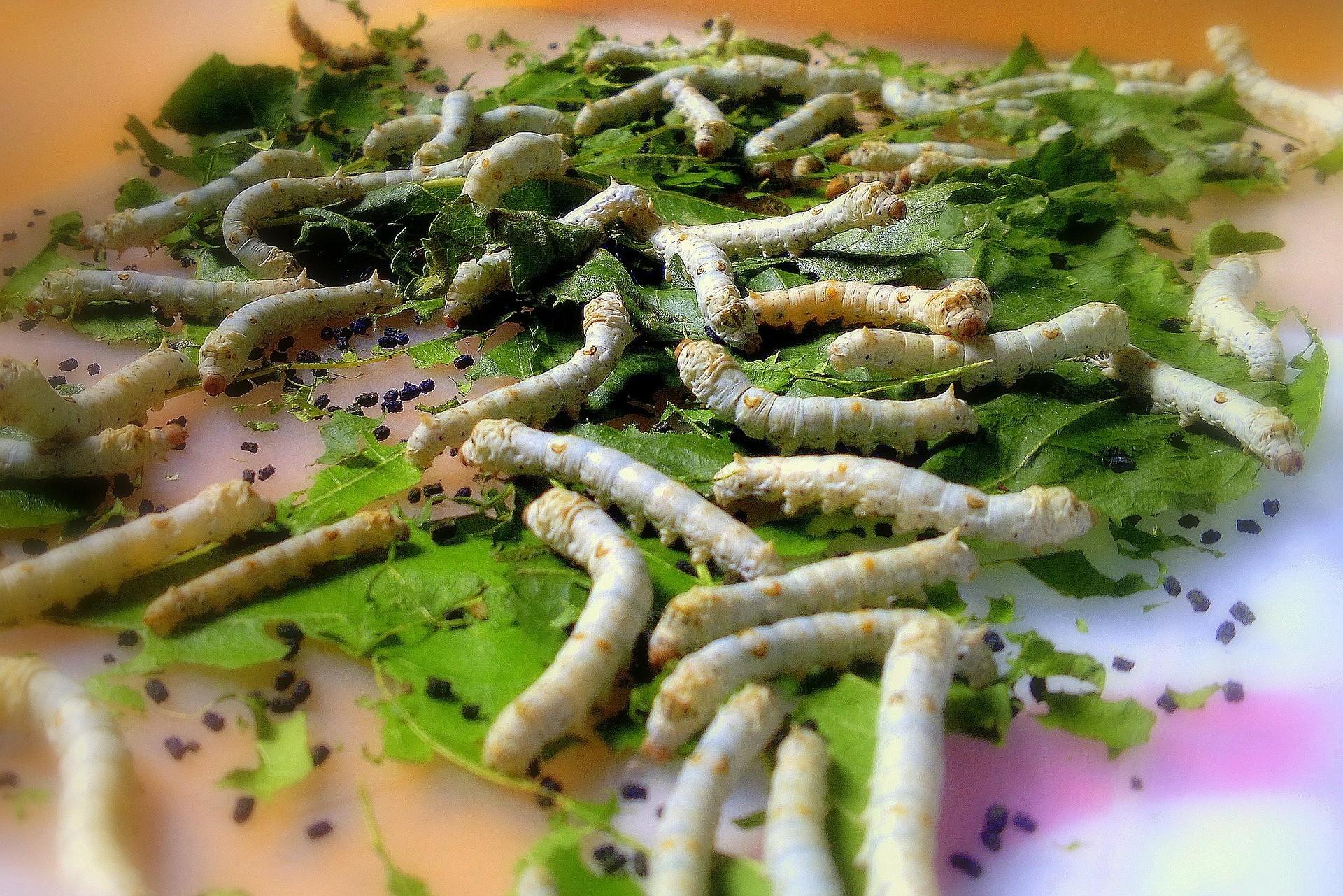 Una investigación para lograr materiales inteligentes se basa en alimentar gusanos con grafeno.