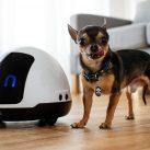 Robot para mascotas