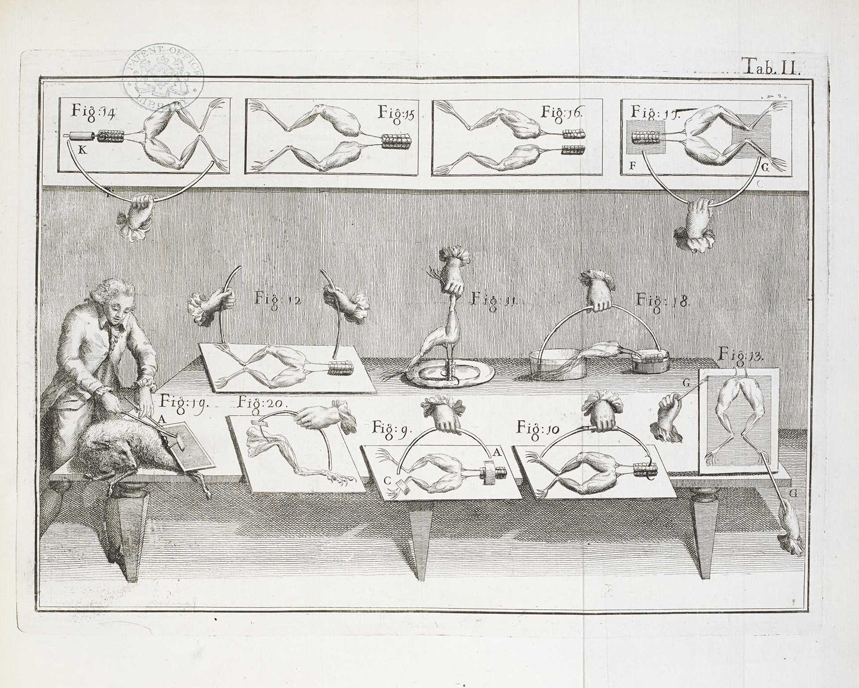 Ilustración sobre los experimentos de Galvani con ranas.