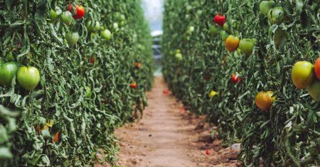La agricultura ecológica podría estar agravando el cambio climático