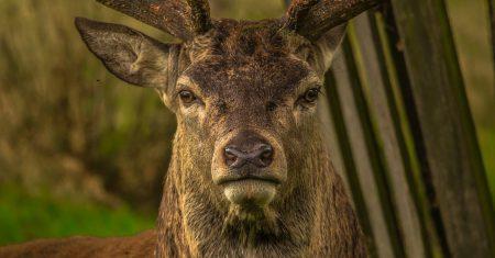 ¿Qué enfermedad padecen los ciervos zombies?