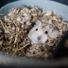 control mental de ratas