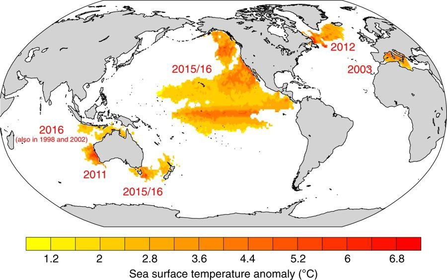 Las olas de calor estudiadas se han dado sobre todo en el océano Pacífico.