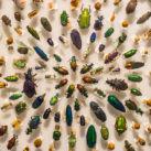 extinción insectos