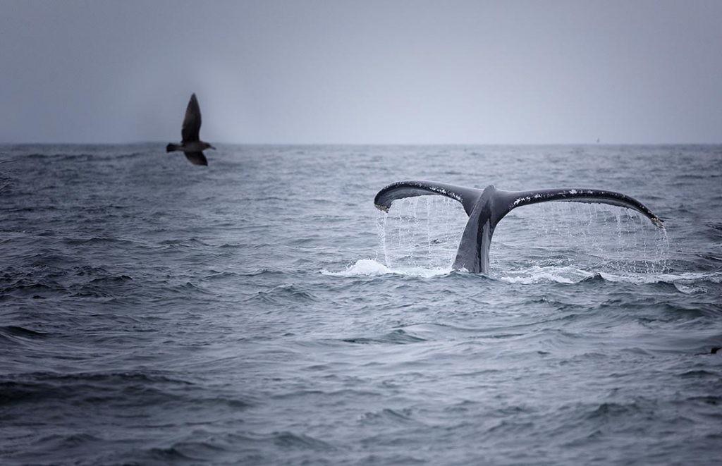 Las olas de calor marinas influyen en los ecosistemas de los océanos.