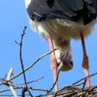 webcams en directo aves