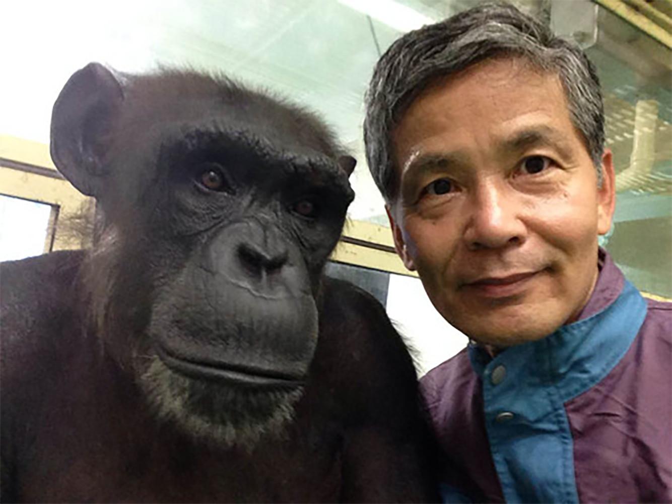 Chimpancés y humanos