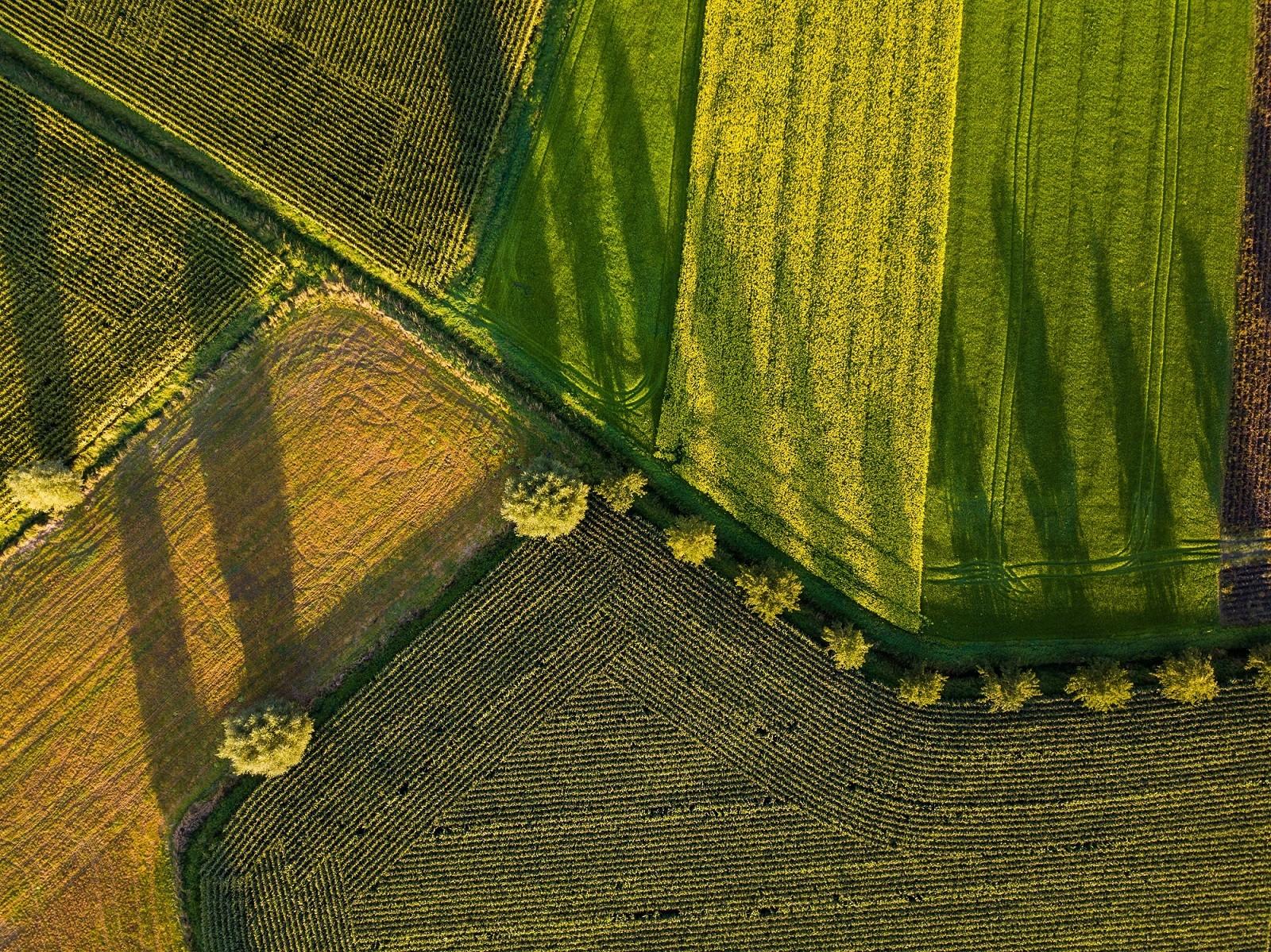 Foodtech aboga por la agricultura sostenible