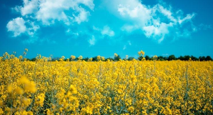 Los biocombustibles se obtienen de productos naturales