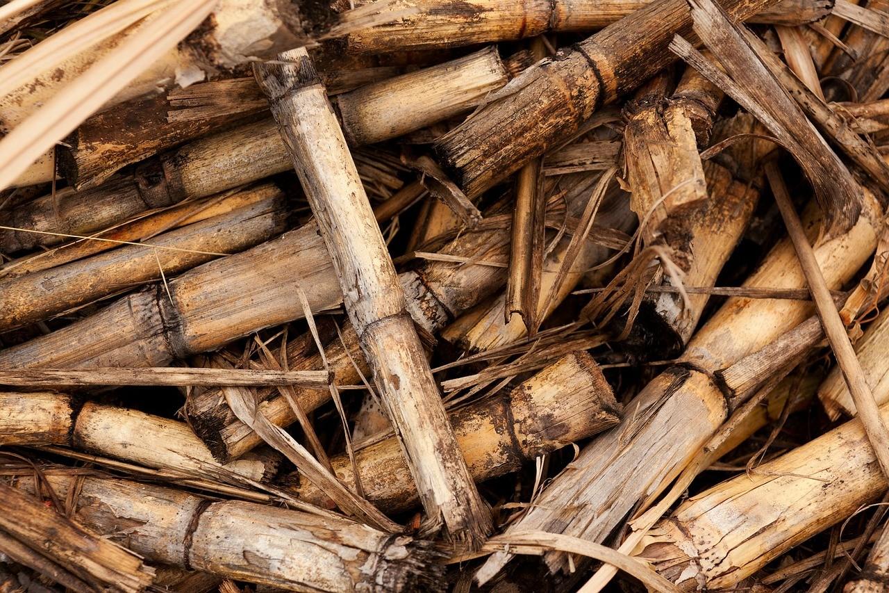 Los biocombustibles son una energía más limpia