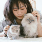 acariciar a gato