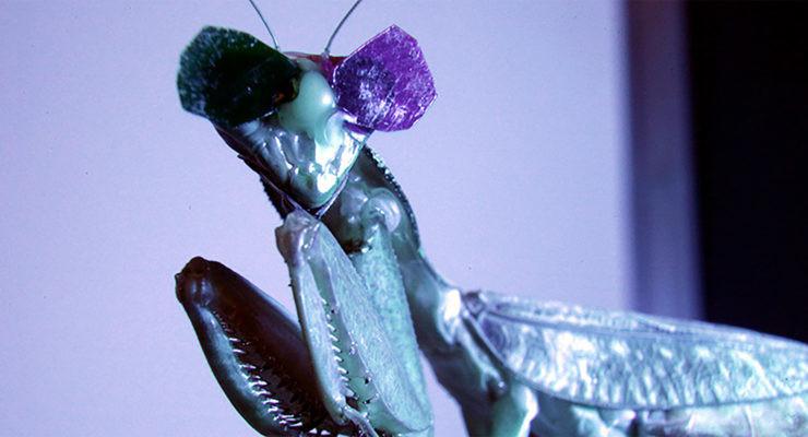 Mantis religiosa con gafas 3D