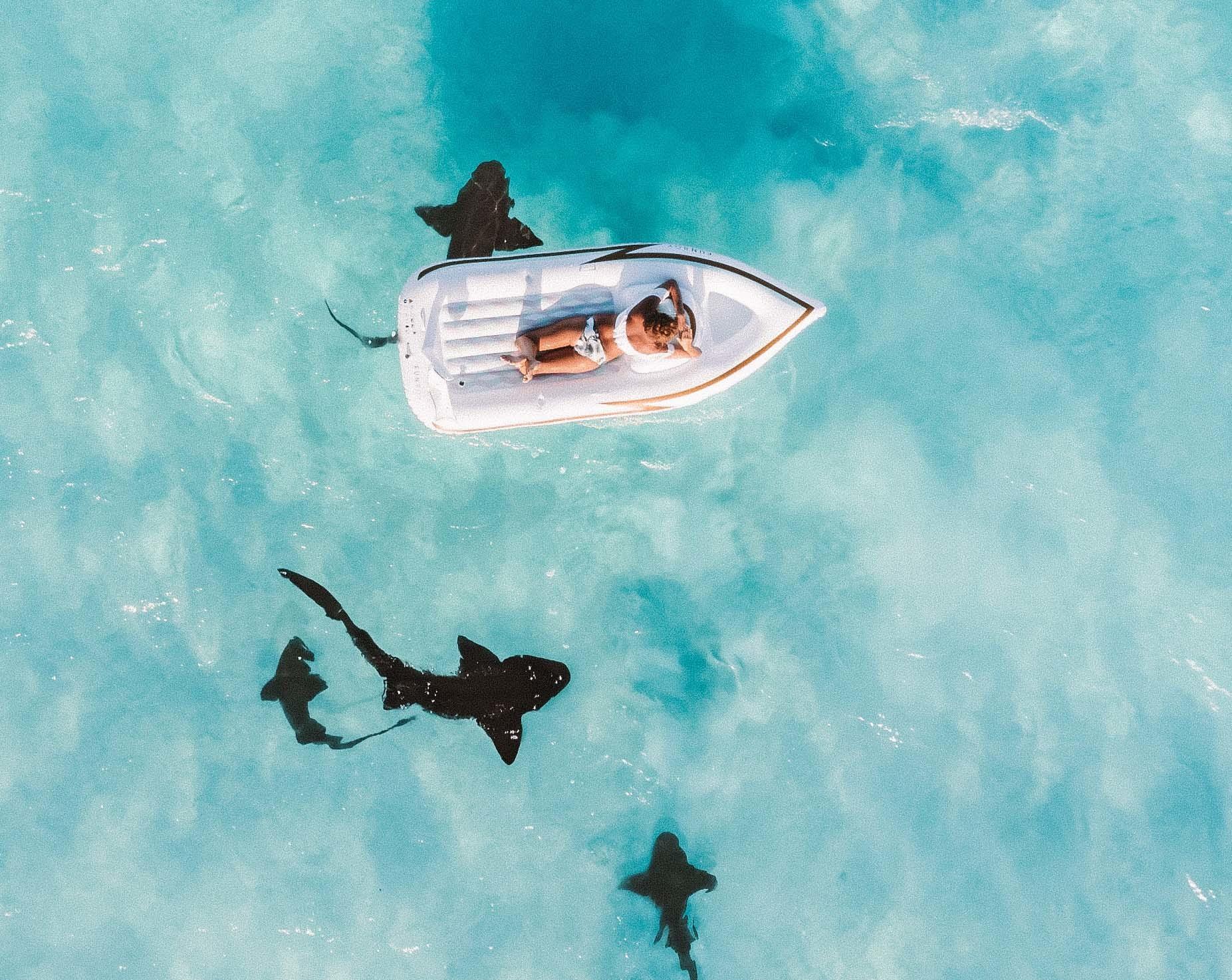 Analizamos cuántos ataques de tiburón se han dado en las últimos siglos.