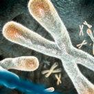 longevidad telomero