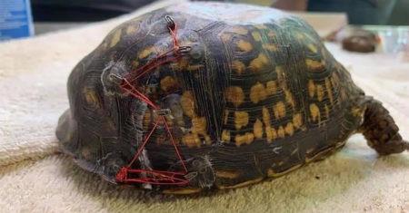 salvar tortugas