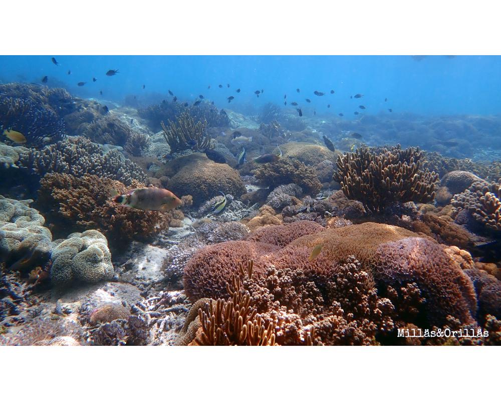 arrecifes de coral en Malasia