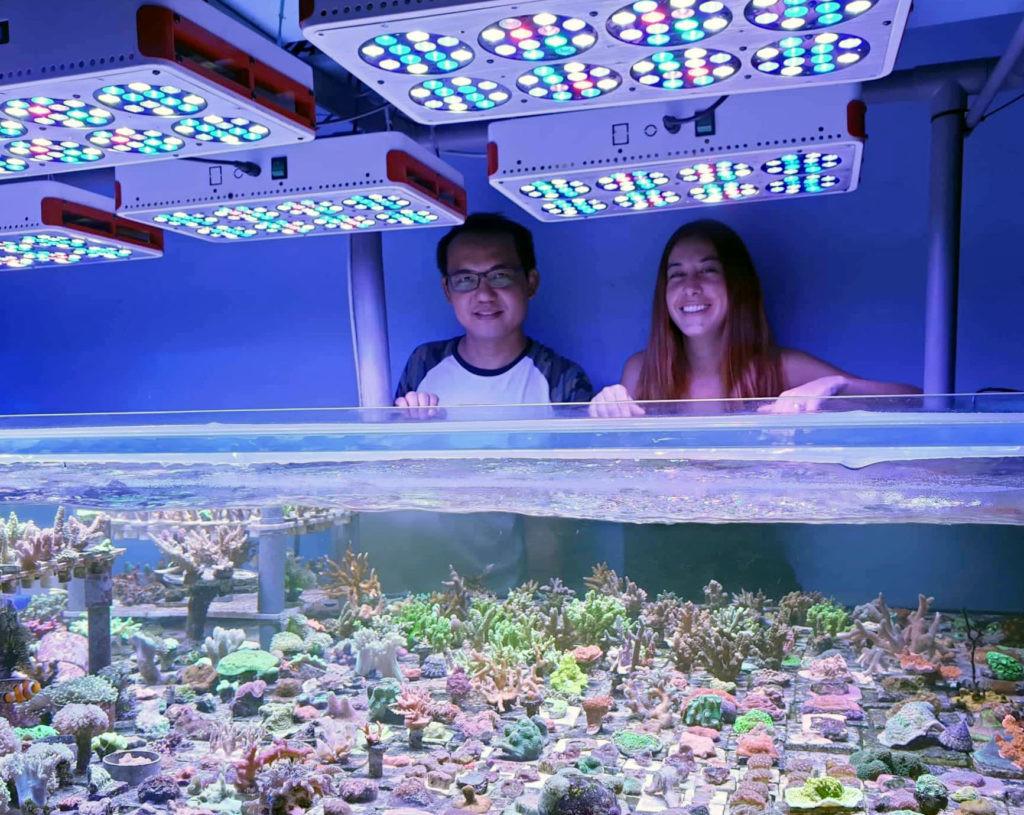 La bióloga española que reforesta los arrecifes de Malasia
