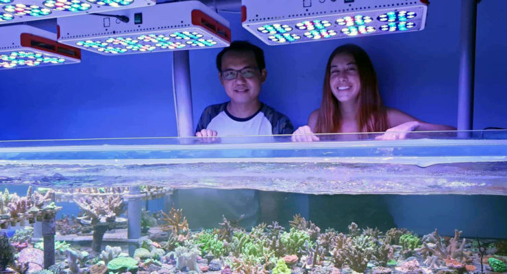 reforestar arrecifes de coral