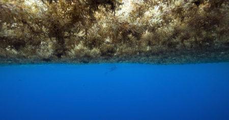 océano de algas