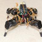 Organoides en robots arañas